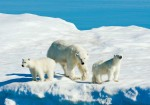 Arctic Cruise: Land Of The Ice Bears