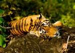 Tigers & Treasures of India