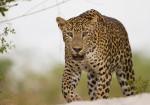 Wild Sri Lanka & Enchanting Maldives