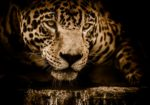 Brazil's Pantanal & Amazon: A Wildlife Safari